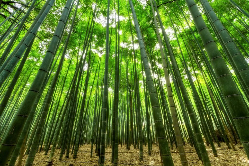 Bamboo grows really fast, because of that, using bamboo toilet paper can reduce deforestation